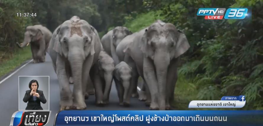 อุทยานฯ เขาใหญ่โพสต์คลิป ฝูงช้างป่าออกมาเดินบนถนน