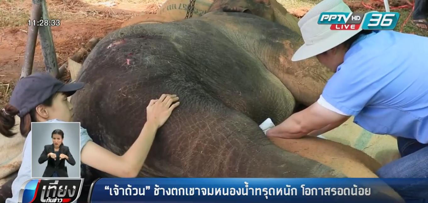 """""""เจ้าด้วน"""" ช้างตกเขาจมหนองน้ำทรุดหนัก โอกาสรอดน้อย"""