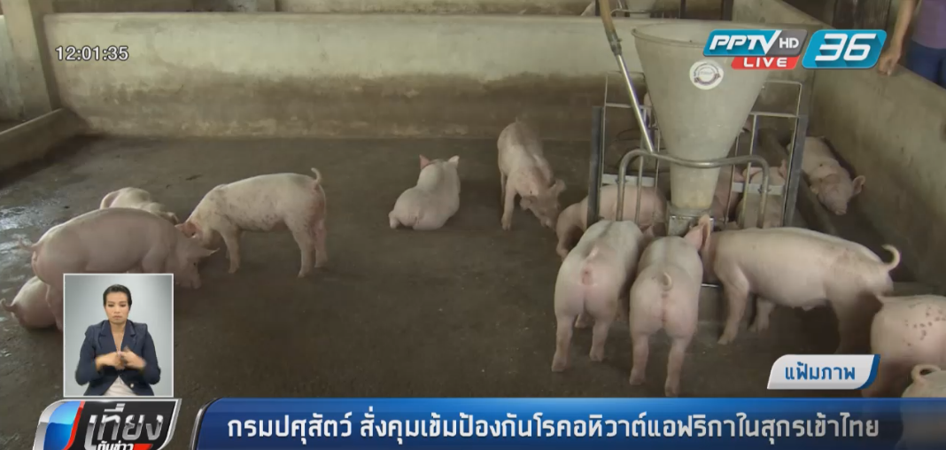 กรมปศุสัตว์ สั่งคุมเข้มป้องกันโรคอหิวาต์แอฟริกันในสุกรเข้าไทย