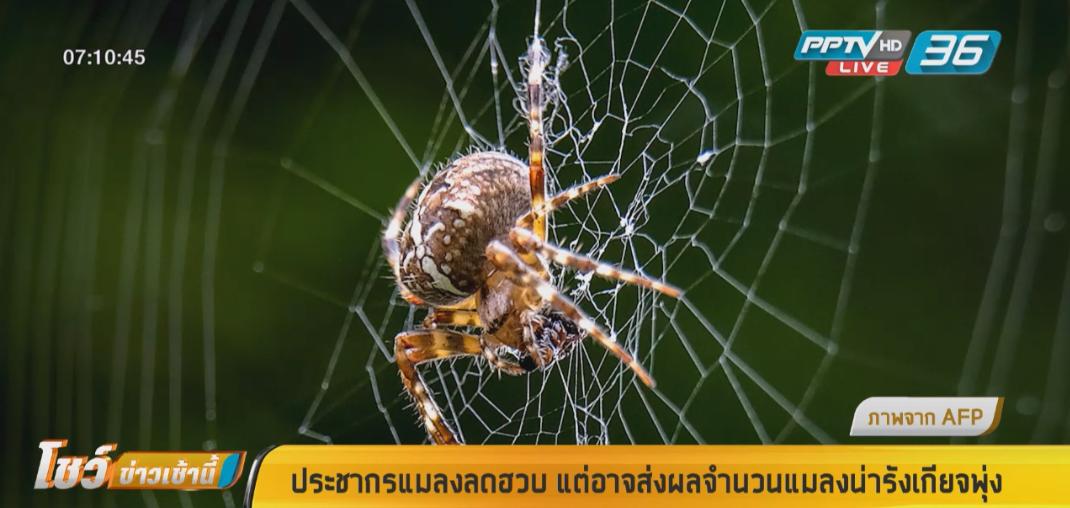 ประชากรแมลงลดฮวบ แต่อาจส่งผลจำนวนแมลงน่ารังเกียจพุ่ง