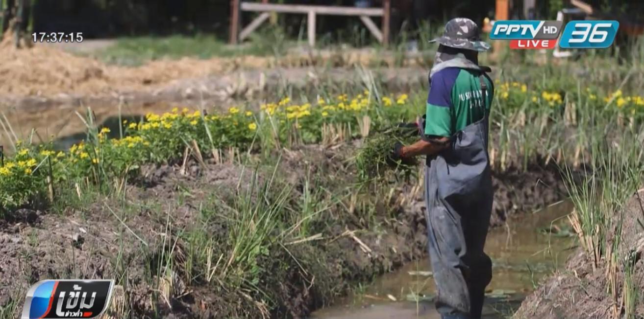 """""""กาแฟชายทุ่ง"""" กับ """"โครงการศูนย์การเรียนรู้เกษตรชุมชนเมืองฯ"""" ของเจ้าฟ้าหญิงนักพัฒนา"""