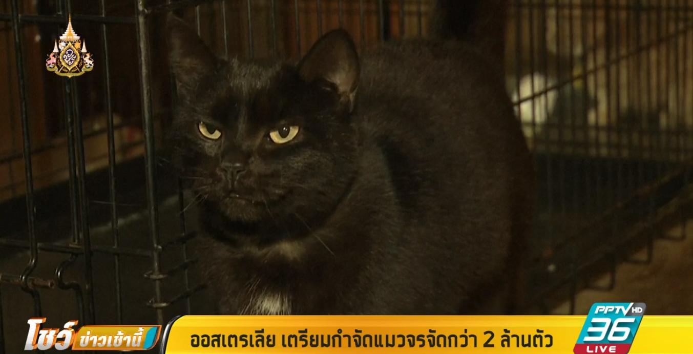 ออสเตรเลีย เตรียมกำจัดแมวจรจัดกว่า 2 ล้านตัว