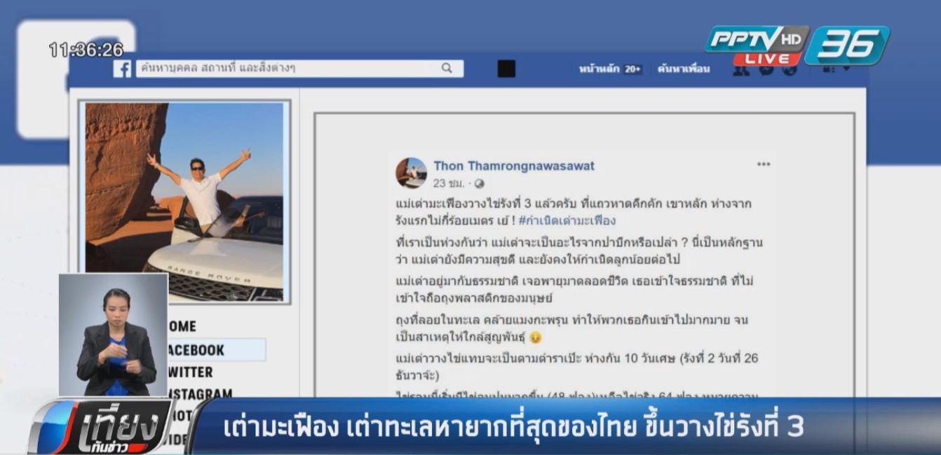 พบเต่ามะเฟือง หายากที่สุดในเมืองไทยวางไข่ชายหาดพังงา