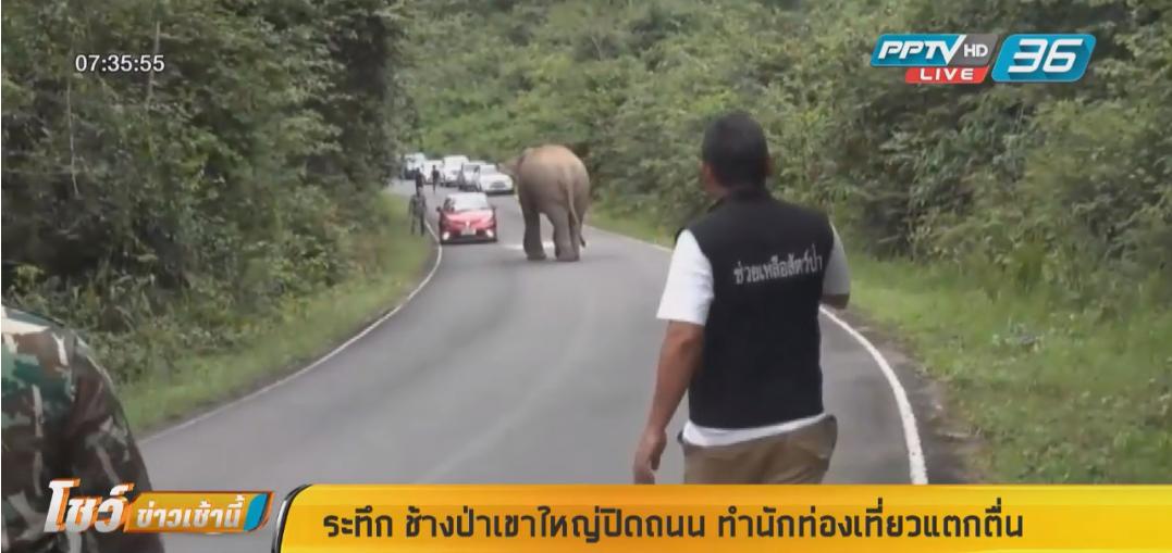 กระเจิง!! ช้างป่าเขาใหญ่คลั่งตกมัน  ถูกแย่งเมีย