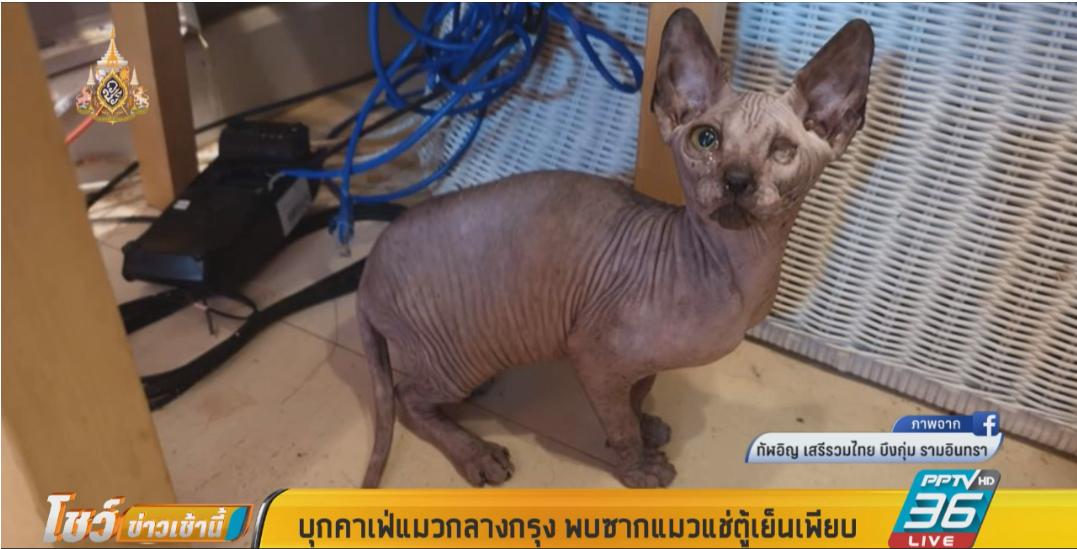 บุกคาเฟ่แมว เจอซากแมวกว่า 50 ตัวในตู้เย็น