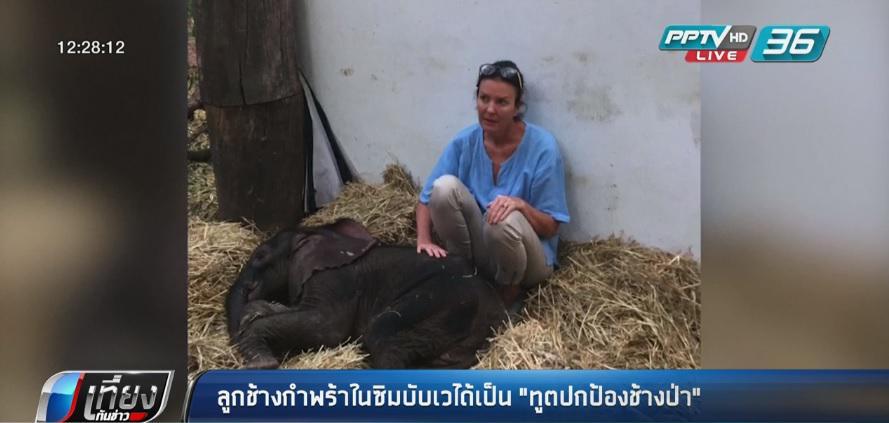 """ลูกช้างกำพร้าในซิมบับเวได้เป็น """"ทูตปกป้องช้างป่า"""""""