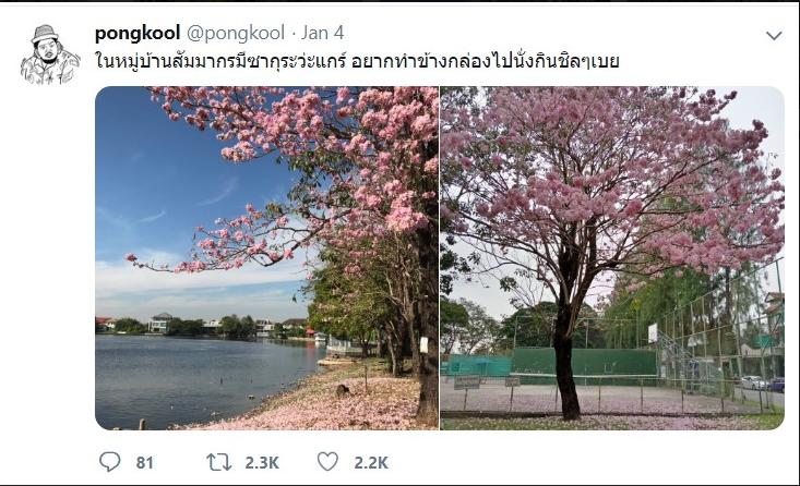 """""""ป๊อบ ปองกูล"""" ชี้เป้า แหล่ง """"ซากุระเมืองไทย"""" บานสะพรั่ง"""