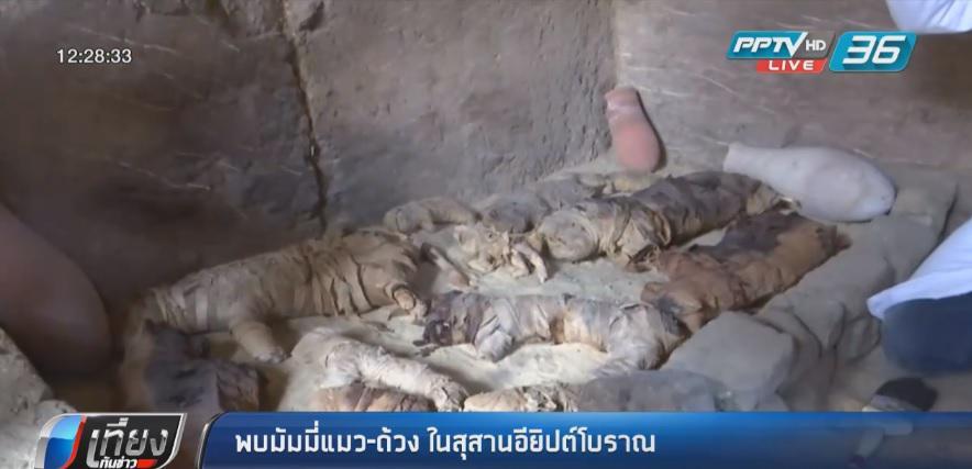 """พบ """"มัมมี่แมว-ด้วง"""" ในสุสานอียิปต์โบราณ"""