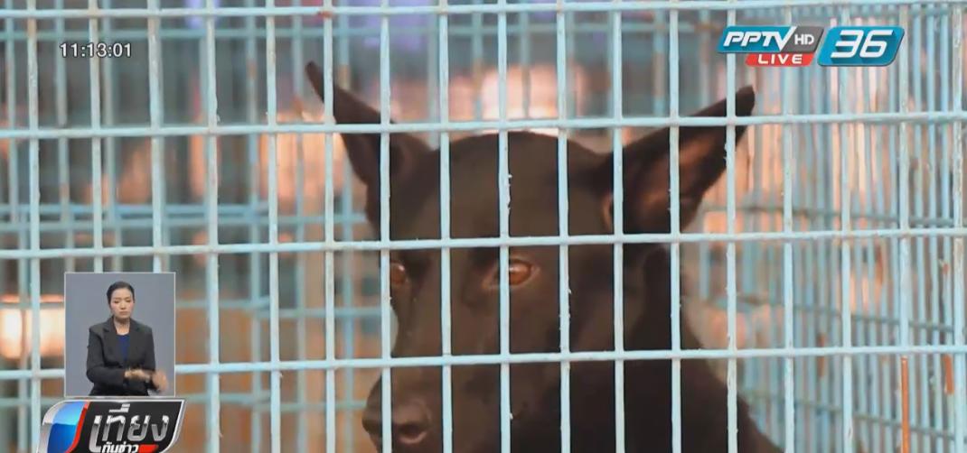 เทศบาลเมืองศิลา เผยบริหารจัดการดูแลสุนัข-แมวจรจัดอย่างดี