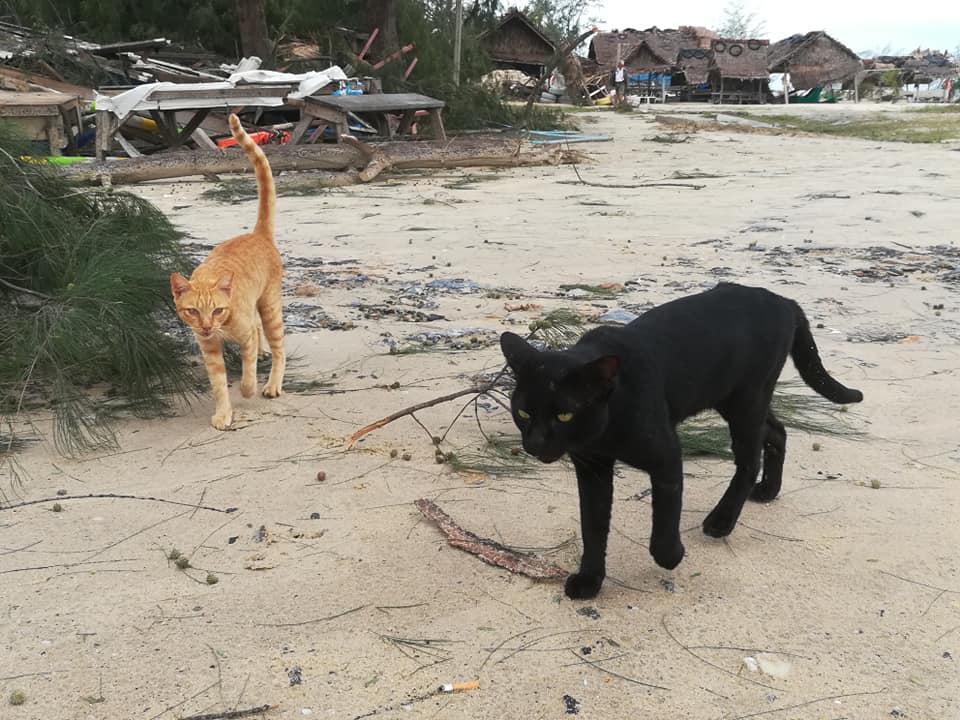 """เมื่อ """"น้องหมา – น้องแมว"""" ต้องกลายเป็นผู้ประสบภัย """"ปาบึก"""""""