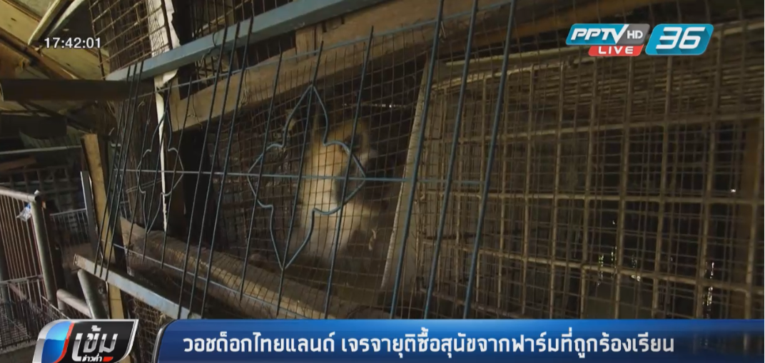 วอชด็อกไทยแลนด์ เจรจายุติซื้อสุนัขจากฟาร์มที่ถูกร้องเรียน