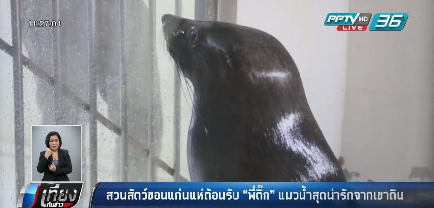 """สวนสัตว์ขอนแก่นแห่ต้อนรับ """"พี่ติ๊ก"""" แมวน้ำสุดน่ารักจากเขาดิน"""