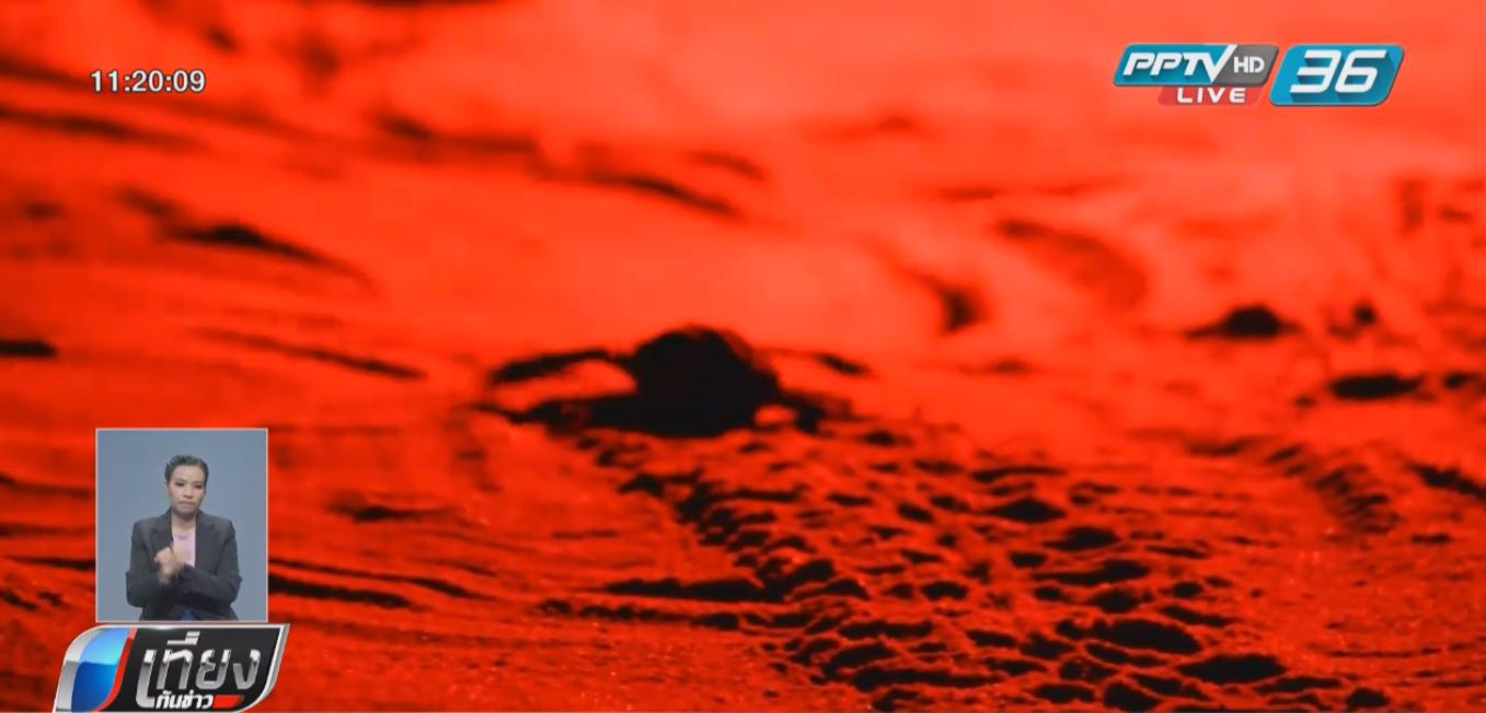 จนท.ขุดทรายช่วย ลูกเต่ามะเฟือง 34 ตัว ออกจากหลุมปล่อยสู่ทะเล