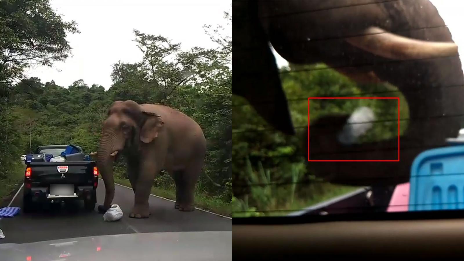 เผยคลิปช้างป่าเขาใหญ่ ดักค้นรถหาของกิน ชาวเน็ตเสียงแตกควรจอด หรือขับหนี?