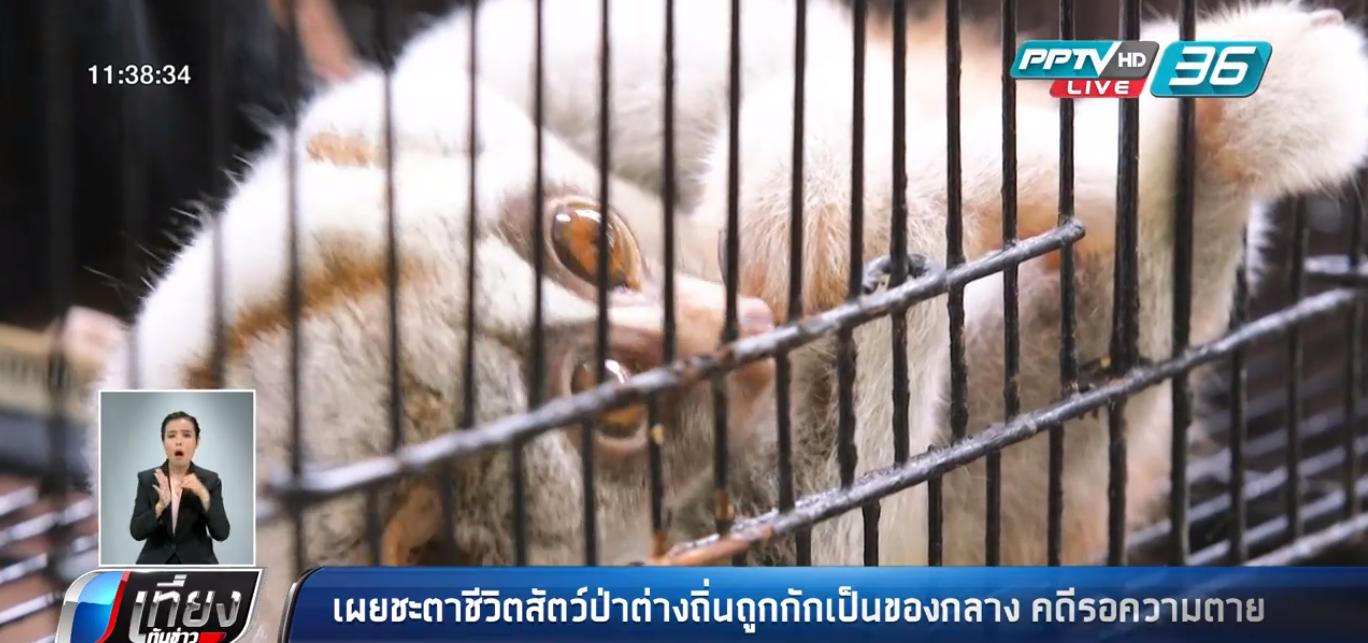 เผยชะตาชีวิตสัตว์ป่าต่างถิ่นของกลาง รอความตายภายในกรง