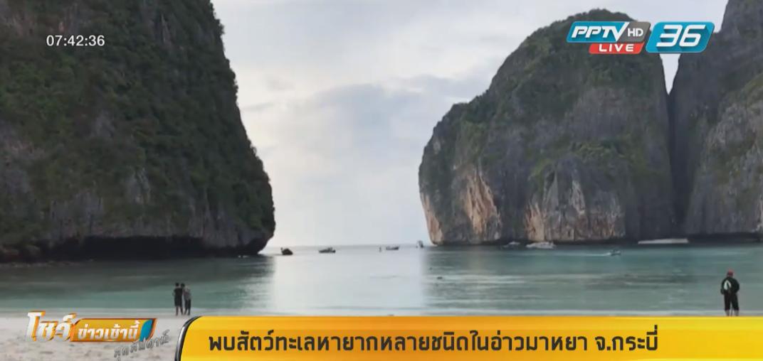 พบสัตว์ทะเลหายากหลายชนิดในอ่าวมาหยา